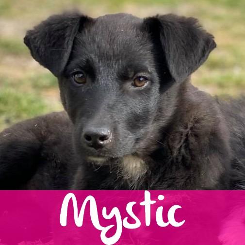 MysticF