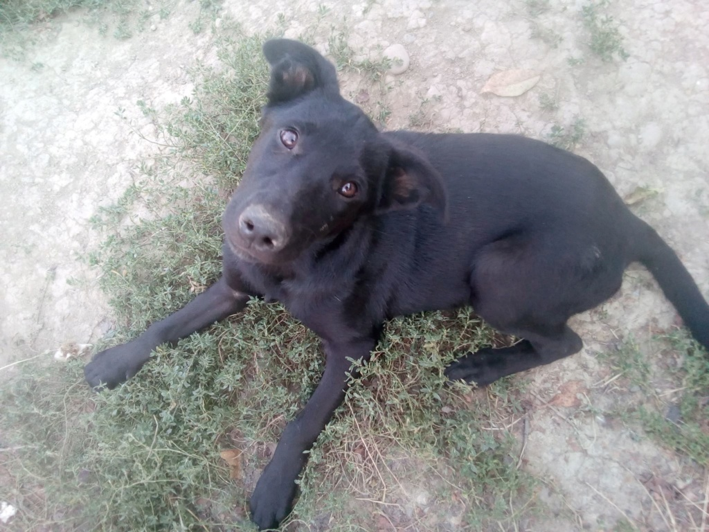 Naïa- femelle- fourrière de Târgu Frumos Naia_310