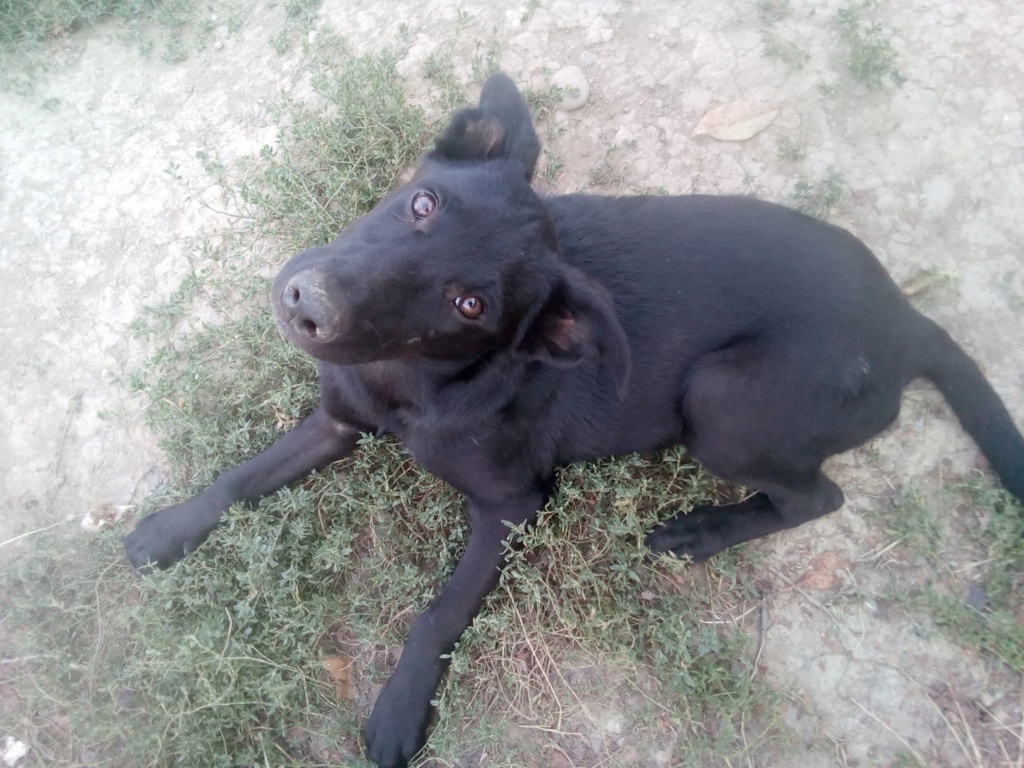 Naïa- femelle- fourrière de Târgu Frumos Naia_410