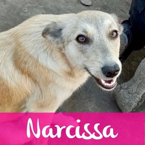 NarcissaF