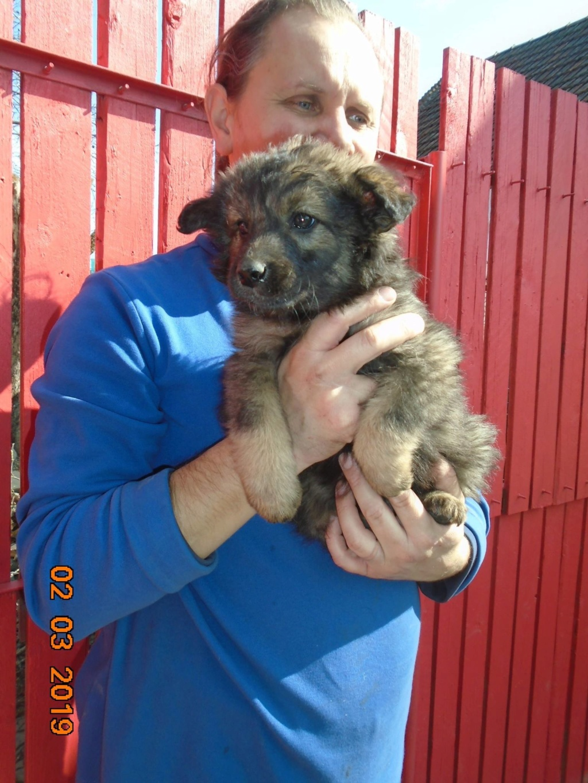 Kindo (ex-Nathaniel) - mâle- refuge d'Arad - réservé adoption (68) Nathan18