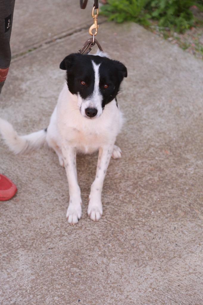 Negruta- femelle- refuge d'Arad - Réservée adoption (67) Negrut15