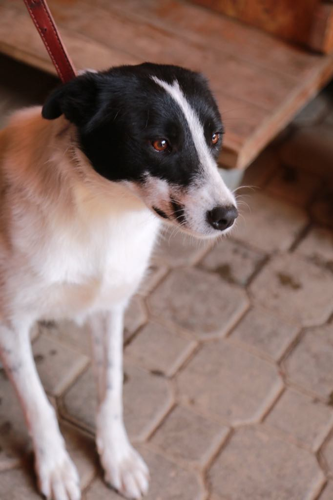 Negruta- femelle- refuge d'Arad - Réservée adoption (67) Negrut19