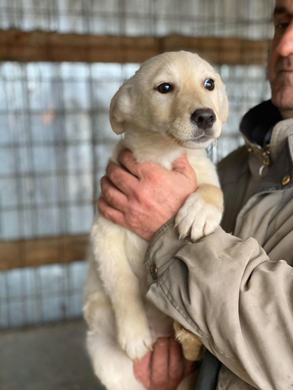 Newton- mâle- fourrière de Târgu Frumos - adopté via Andreea Newton37