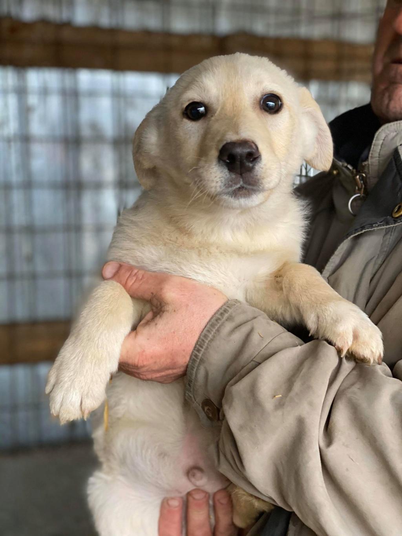 Newton- mâle- fourrière de Târgu Frumos - adopté via Andreea Newton40