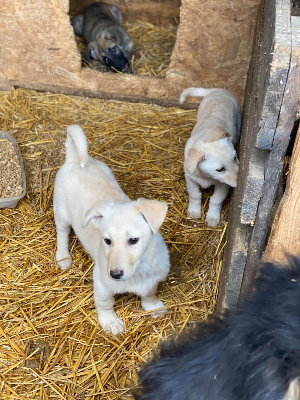 Sayana- femelle- fourrière de Târgu Frumos - adoptée via Andreea Newton49