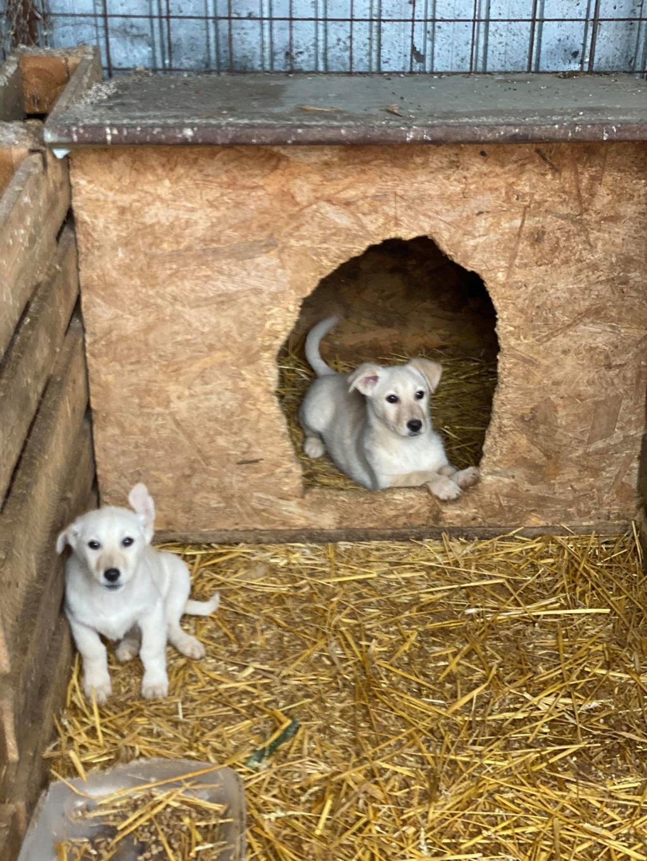 Sayana- femelle- fourrière de Târgu Frumos - adoptée via Andreea Newton50