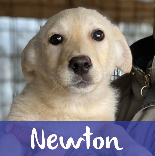 NewtonM