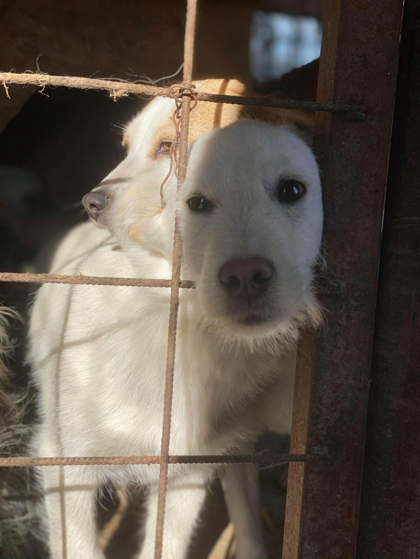 Nima- femelle- fourrière de Târgu Frumos - adoptée via Andreea Nima_110