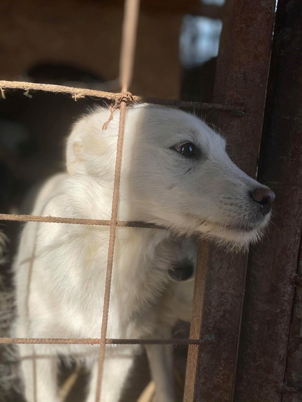 Nima- femelle- fourrière de Târgu Frumos - adoptée via Andreea Nima_210