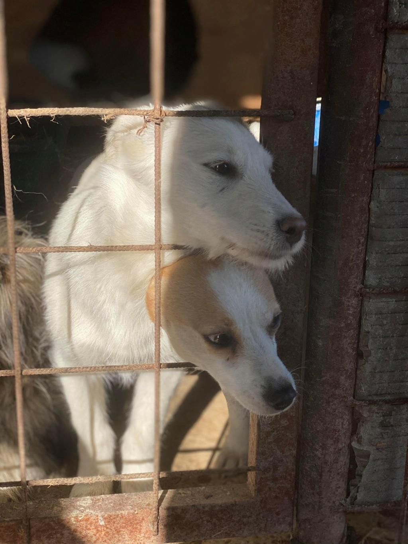 Nima- femelle- fourrière de Târgu Frumos - adoptée via Andreea Nima_310