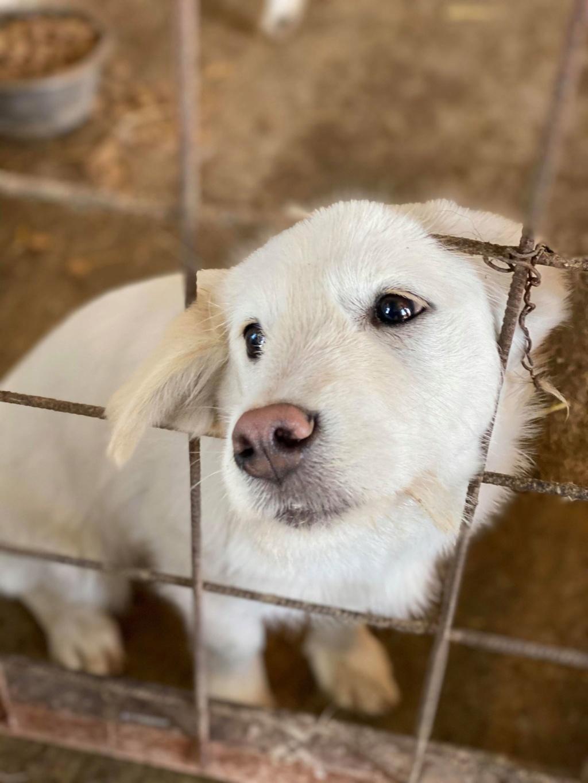 Nima- femelle- fourrière de Târgu Frumos - adoptée via Andreea Nima_410