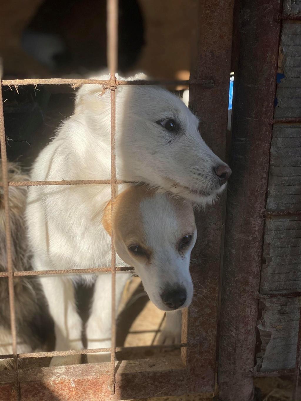 Nima- femelle- fourrière de Târgu Frumos - adoptée via Andreea Nima_510
