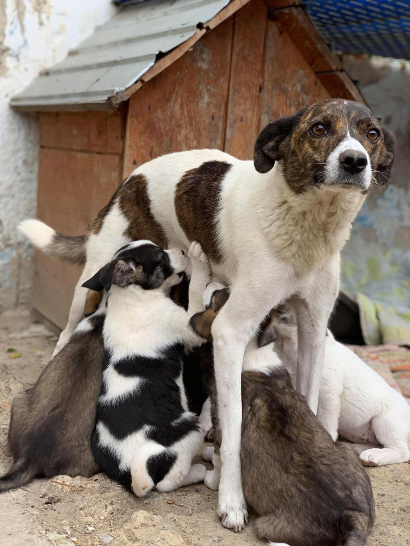 Nirvana- femelle- fourrière de Târgu Frumos - adoptée via Andreea Nirvan12