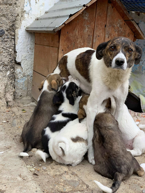 Nirvana- femelle- fourrière de Târgu Frumos - adoptée via Andreea Nirvan13