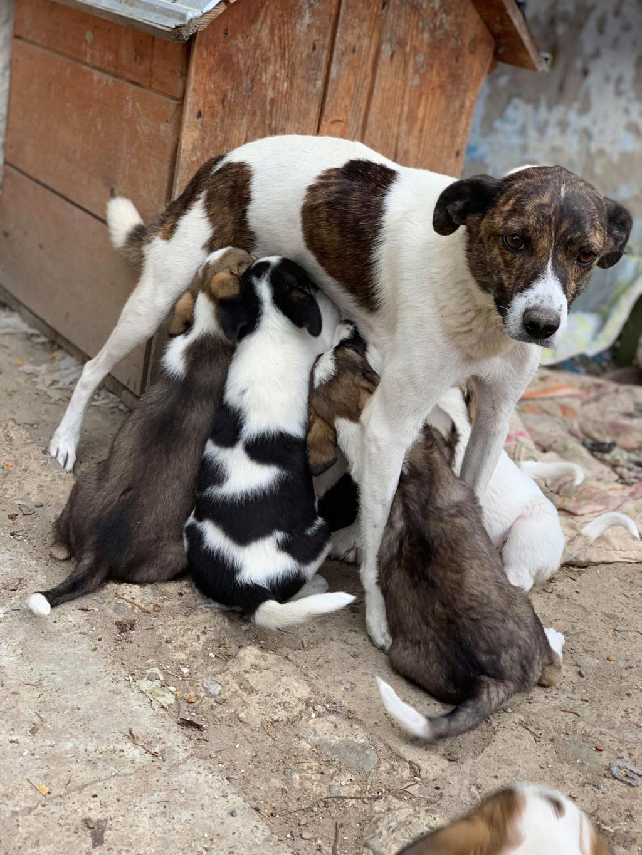 Nirvana- femelle- fourrière de Târgu Frumos - adoptée via Andreea Nirvan14