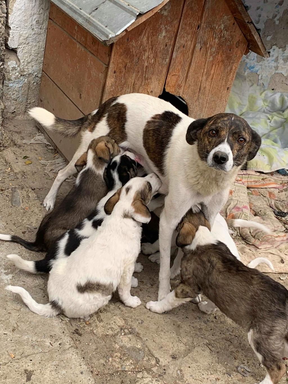 Nirvana- femelle- fourrière de Târgu Frumos - adoptée via Andreea Nirvan15