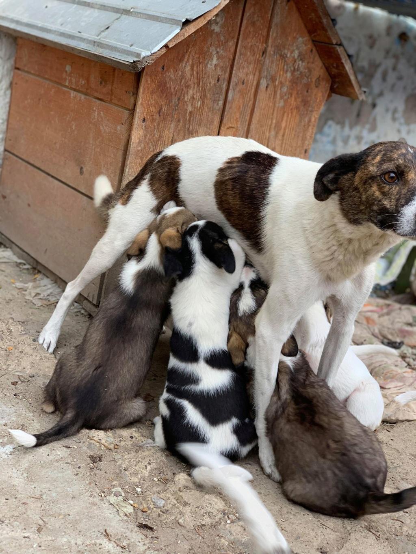 Nirvana- femelle- fourrière de Târgu Frumos - adoptée via Andreea Nirvan16