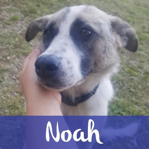 NoahM