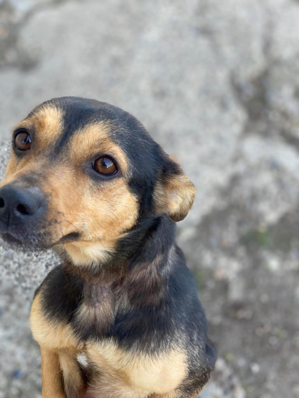 Nudel- femelle- fourrière de Târgu Frumos - adoptée via Andreea Nudel_10