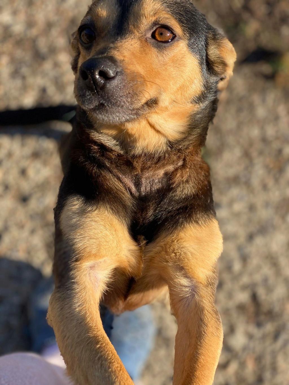 Nudel- femelle- fourrière de Târgu Frumos - adoptée via Andreea Nudel_11