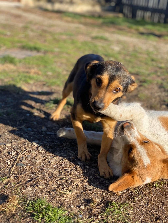 Nudel- femelle- fourrière de Târgu Frumos - adoptée via Andreea Nudel_12