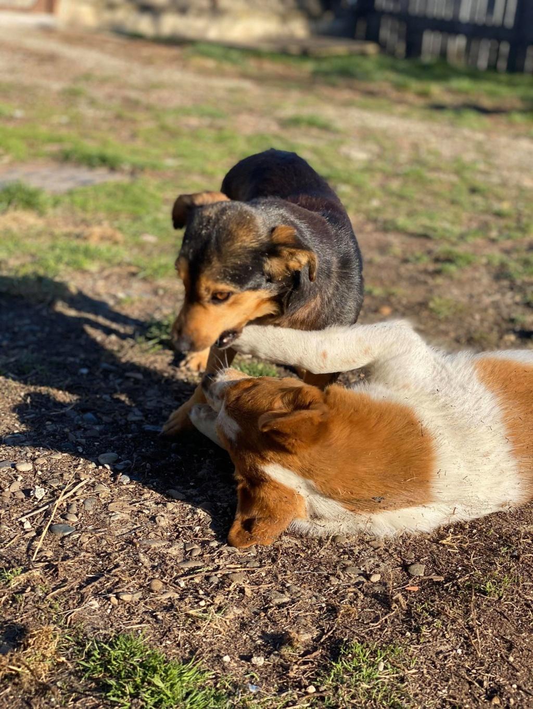 Nudel- femelle- fourrière de Târgu Frumos - adoptée via Andreea Nudel_14