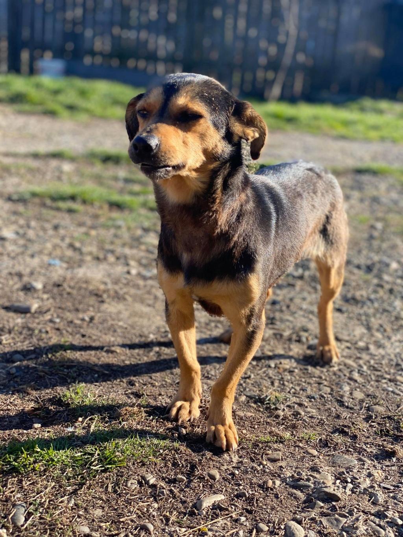 Nudel- femelle- fourrière de Târgu Frumos - adoptée via Andreea Nudel_15