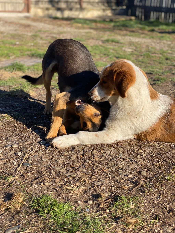 Nudel- femelle- fourrière de Târgu Frumos - adoptée via Andreea Nudel_16