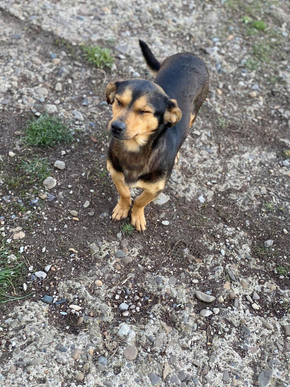 Nudel- femelle- fourrière de Târgu Frumos - adoptée via Andreea Nudel_17