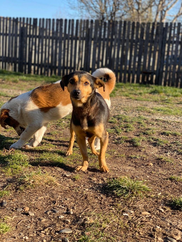Nudel- femelle- fourrière de Târgu Frumos - adoptée via Andreea Nudel_22