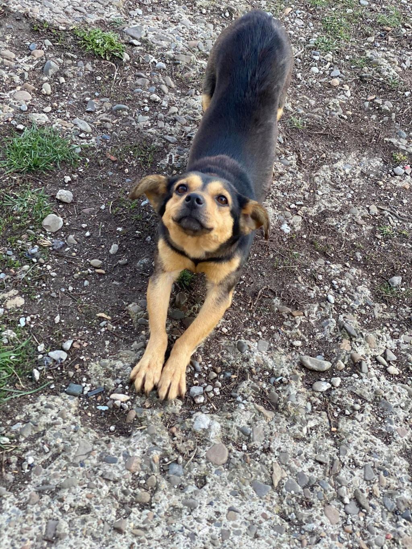Nudel- femelle- fourrière de Târgu Frumos - adoptée via Andreea Nudel_24