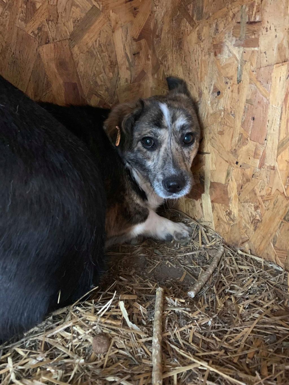 Nutela - chienne femelle - refuge de Târgu Frumos - en famille d'accueil dans le 68 Nutela10
