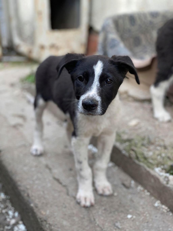 Marley (ex Ophelio) - mâle - fourrière de Târgu Frumos - réservé adoption (67) O_et_f10