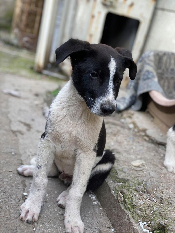 Marley (ex Ophelio) - mâle - fourrière de Târgu Frumos - réservé adoption (67) O_et_f12