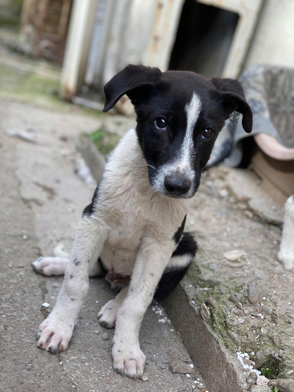 Marley (ex Ophelio) - mâle - fourrière de Târgu Frumos - réservé adoption (67) O_et_f14