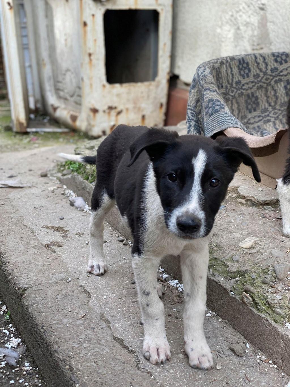 Marley (ex Ophelio) - mâle - fourrière de Târgu Frumos - réservé adoption (67) O_et_f16