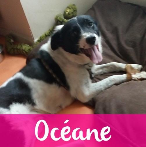 OceaneF
