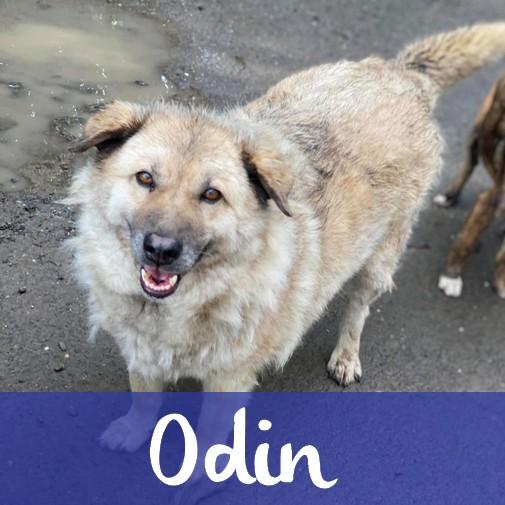 OdinM