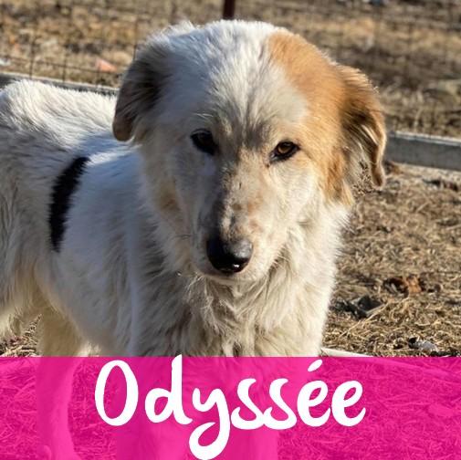 OdysseeF