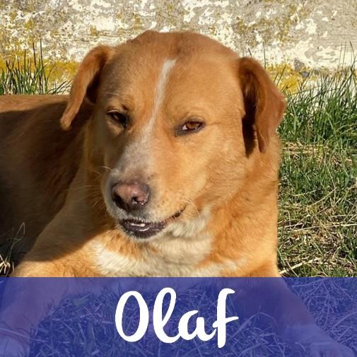 OlafM