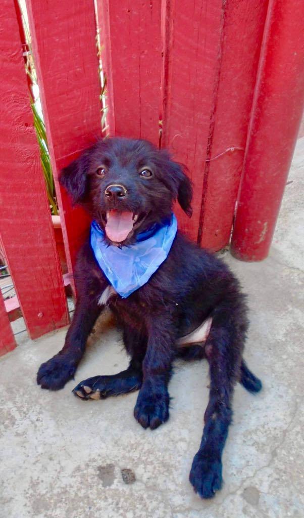 Oliver-mâle- refuge d'Arad- réservé pour adoption (88) Oliver10