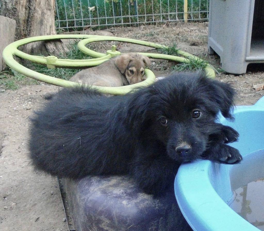 Oliver-mâle- refuge d'Arad- réservé pour adoption (88) Oliver13