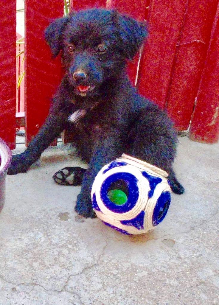 Oliver-mâle- refuge d'Arad- réservé pour adoption (88) Oliver16