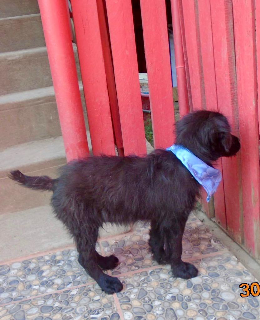 Oliver-mâle- refuge d'Arad- réservé pour adoption (88) Oliver17