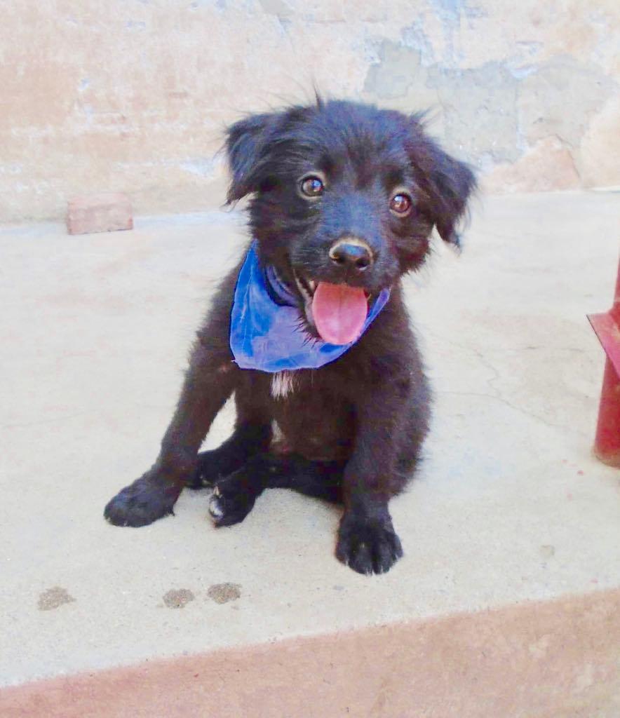 Oliver-mâle- refuge d'Arad- réservé pour adoption (88) Oliver18