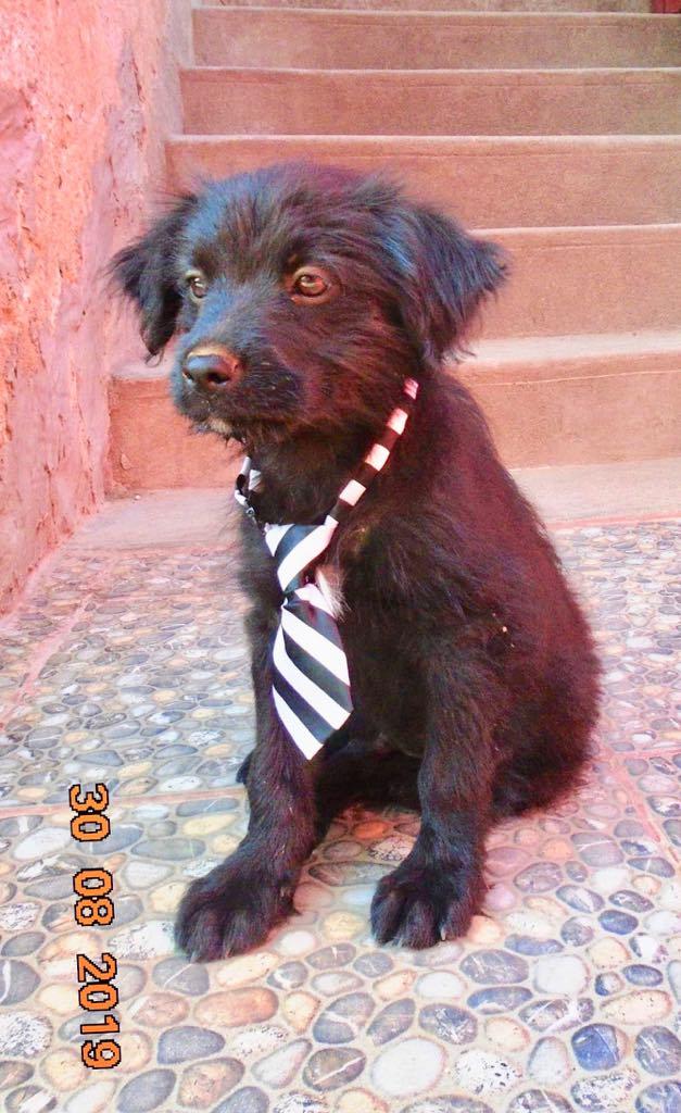 Oliver-mâle- refuge d'Arad- réservé pour adoption (88) Oliver21
