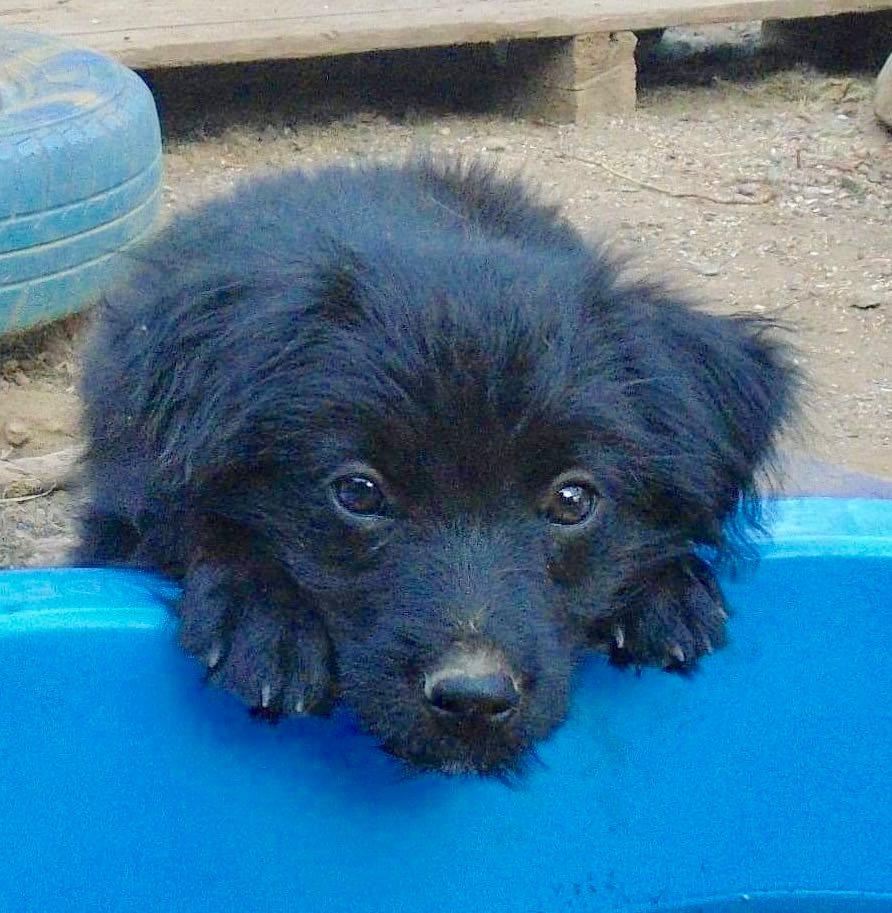 Oliver-mâle- refuge d'Arad- réservé pour adoption (88) Oliver22