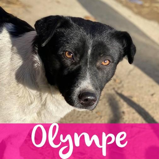 OlympeF