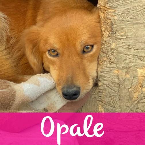OpaleF